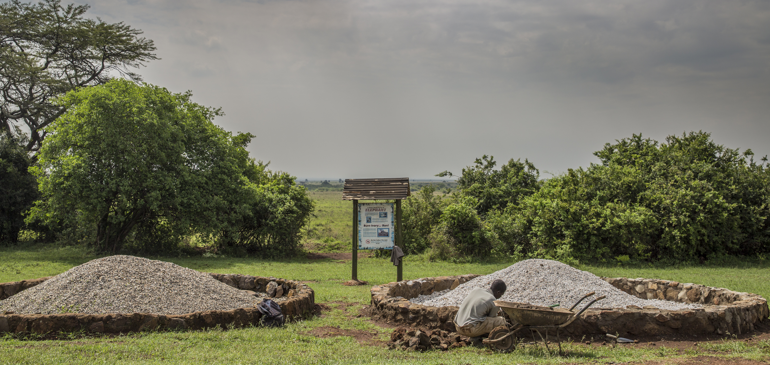 Chasing Ivory Out of Business
